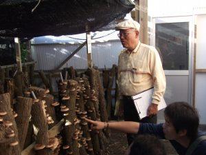 垂水体験まつり、準備中新城の山田氏のシイタケ