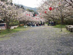 大隅線鉄道線路跡桜満開