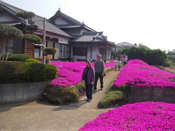 佐土原桜祭り、研修視察-1