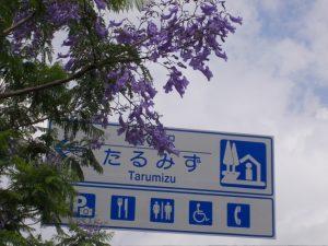 道の駅垂水ジャカランタの花が満開-1