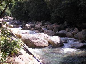 本城川の清流